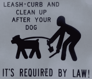 Leash and clean up after your dog