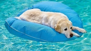 Dog floating in a pool